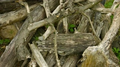 Pile of rotten wood in an oak forest Stock Footage