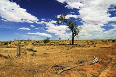 Veld in South Australia open Landscape with red earth Stock Photos