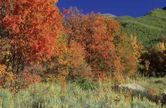 Fall coloured forest in the wasatch range, skyline drive, utah, usa Stock Photos