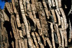 Stock Photo of cork bark andalusia spain