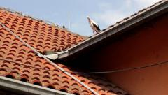 One stork standing on the orange roof of house and combing feathers. Blue sky. Stock Footage