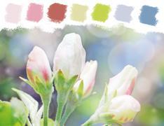 Apple tree flower buds color palette Stock Illustration