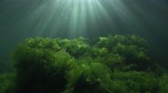 Sunbeams underwater shaking with green algae Stock Footage