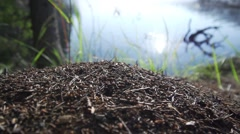 Anthill background forest with lake and green grass Stock Footage