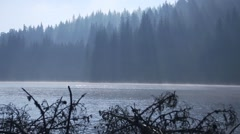 Rays penetrate through the pine forest and lake illuminate Stock Footage