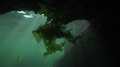 Marine algae float in entrance to an underwater cave Stock Footage