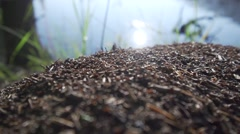 Forest anthill near water Stock Footage