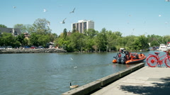 Seagulls Flying over the Credit River, Scavenging for scraps of food. Stock Footage