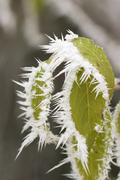 Stock Photo of hoarfrost at leaves
