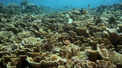 Tropical coral reef falling in and out of shade Stock Footage