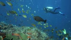 Scuba diver watching thriving coral reef alive with sea life Stock Footage