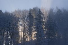 morning dust and morning sunbeam in wintertime at the blomberg near bad tölz - stock photo