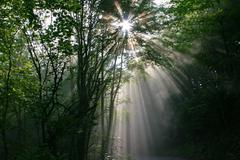 Sun rays radiate in the morning fog in a forest Stock Photos