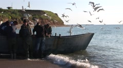 Seagulls stealing fish from fishermen boat 2 - stock footage