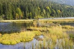 kleiner arbersee lake bavarian forest germany - stock photo