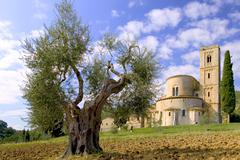 Olive tree with abbazia di sant antimo in the background Stock Photos