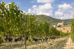 Vineyard with abbazia di sant antimo in the background Stock Photos