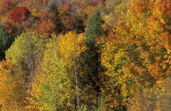fall coloured forest in vermont, new england, vermont, usa - stock photo