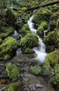 small stream running through moss pads in the temperate rainforest, mount rai - stock photo