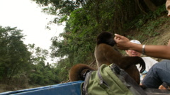 Petting a woolly monkey in the Amazon Stock Footage