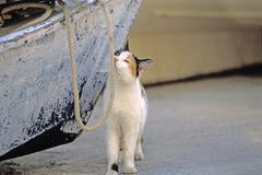 Cat snuffling at rope Lanzarote Spain - stock photo
