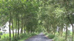 Good street trees in the countryside Stock Footage