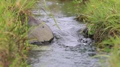 Water stream in slow motion, Showa Memorial Park, Tokyo, Japan Stock Footage