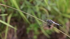 Dragonfly close-up at Showa Memorial Park, Tokyo, Japan Stock Footage