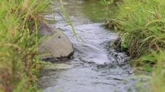 Water stream at Showa Memorial Park, Tokyo, Japan Stock Footage