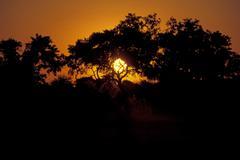 Stock Photo of Sunset in Okovango Delta Botswana