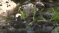 Small Stream Tilt Down Stock Footage