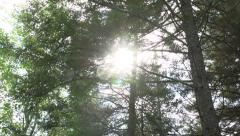 Forest Tilt Up Sun Flare - stock footage