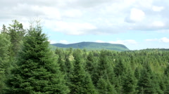 Christmas Tree Farm Pan Stock Footage
