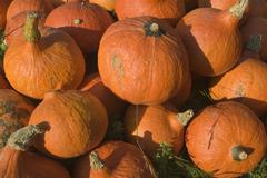 Pile of hokkaido cucurbits or gourds for sale Stock Photos