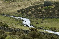valley of river dart near two bridges dartmoor national park devon england - stock photo