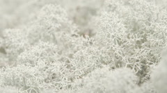 The snow flake like cladonia stellaris on the ground, fs700 odyssey 7q Stock Footage