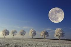 Full moon over sycamore maple trees and fields covered with hoarfrost Stock Photos