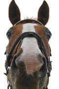 Frontview Equus caballus of a horse Stock Photos