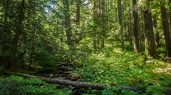 Oregon Lush Forest 642 Stock Footage