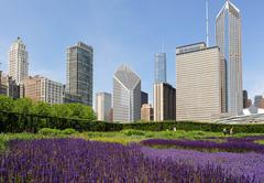 Chicago skyline with lavender fields Kuvituskuvat