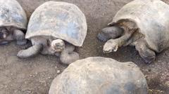 Pan from Galápagos giant tortoise at the Galapagos Islands, Ecuador Stock Footage