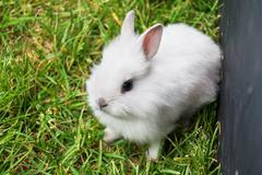 baby white bunny rabbit - stock photo