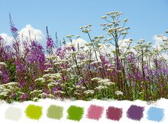 Beautiful wildflowers color palette Stock Illustration