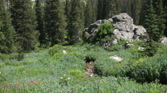 High mountain stream forest meadow Stock Footage