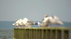 Gulls on a peer Stock Footage