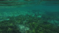 Diving underwater on seagrass Stock Footage