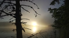 Big dead tree in lake with the sunrise background - stock footage