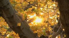 Sunlight trough branches and leaves HD Stock Footage