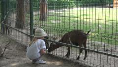 Little Girl Feeding a Baby Goat, Happy Child at Zoo Park, Children and Animals Stock Footage