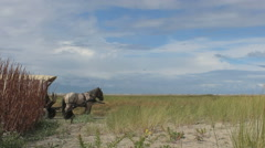 Wagon with two horses on the beach Stock Footage